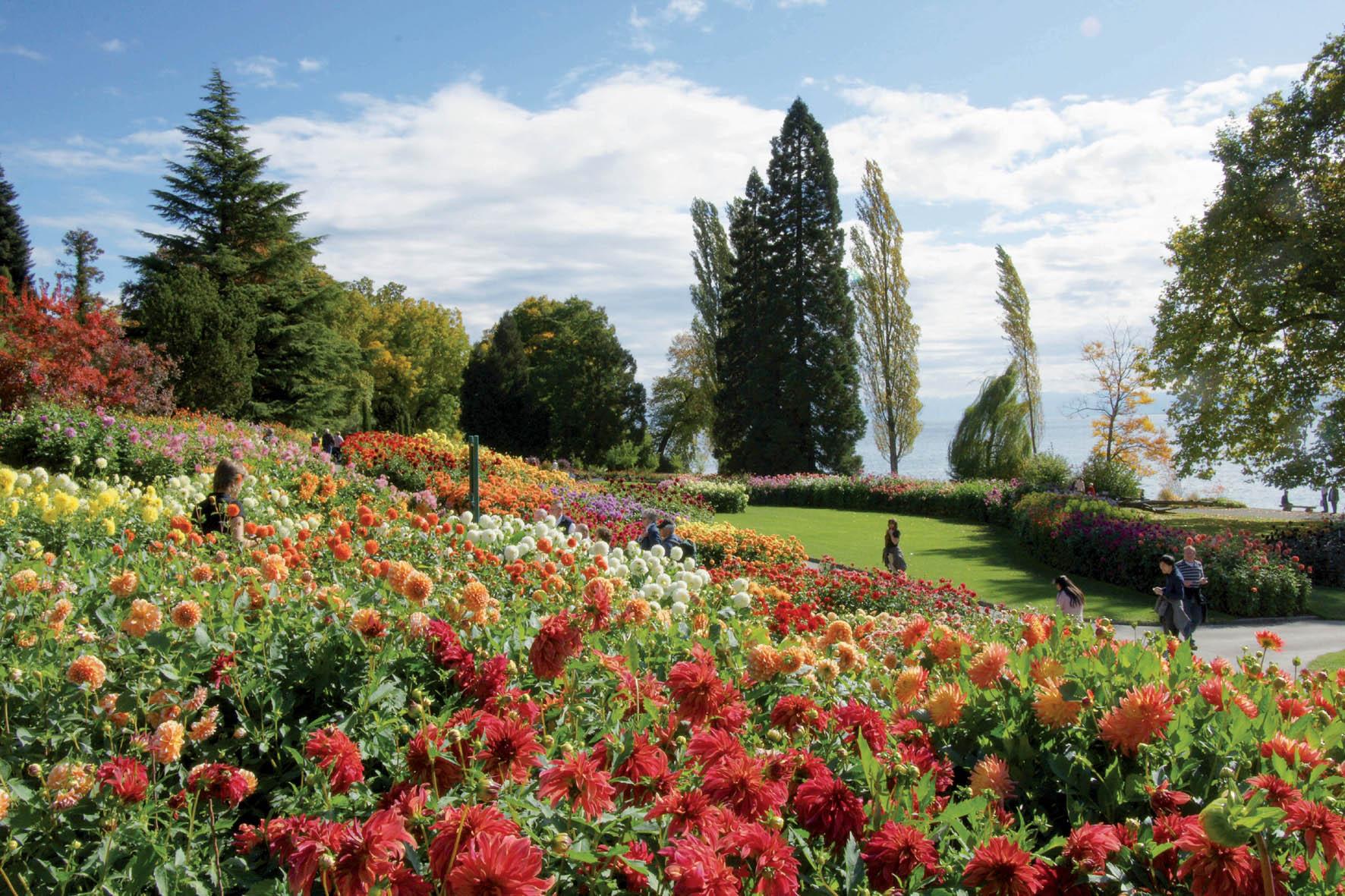 Dahlienblüte im September