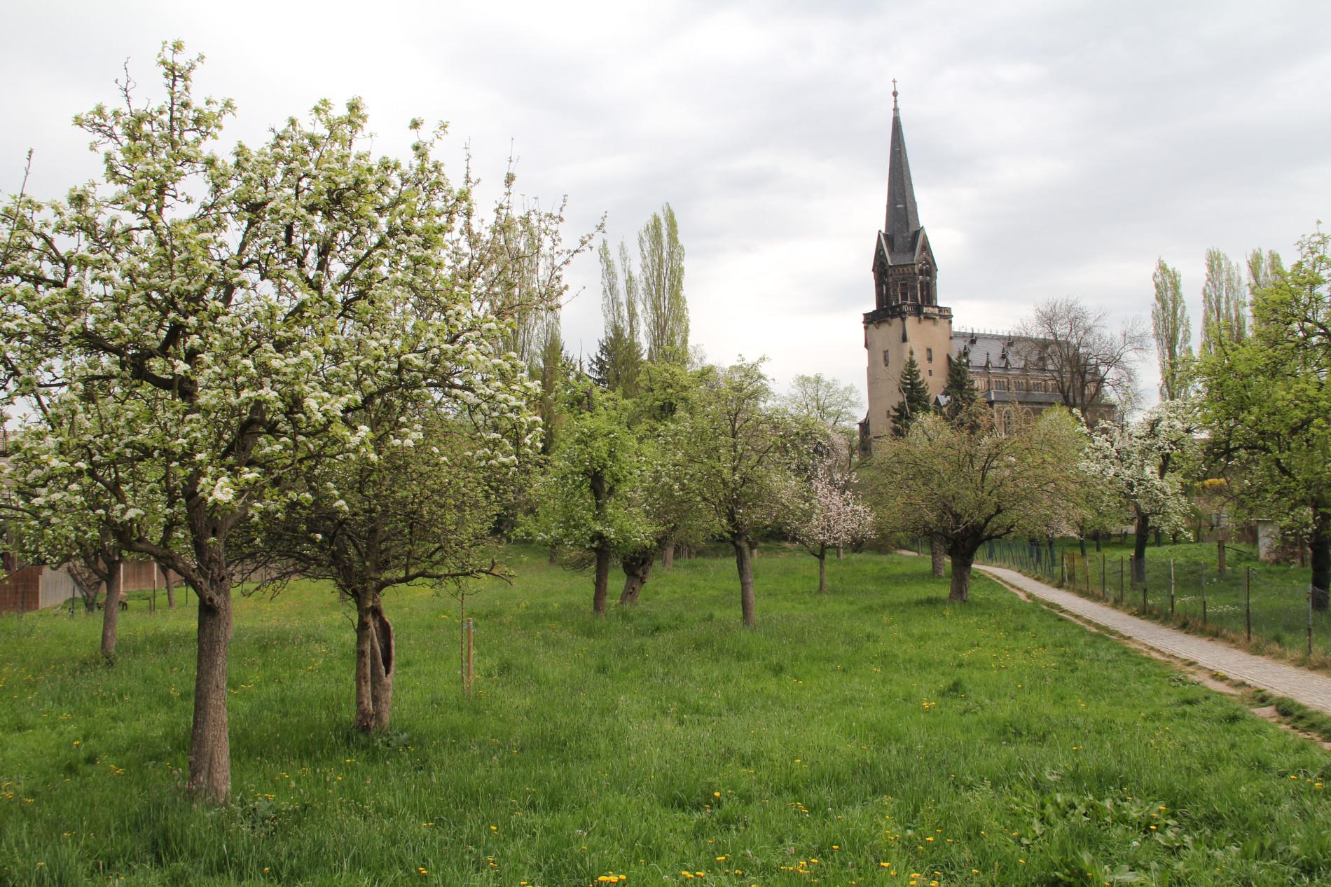 Baum mit Kirche
